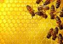 Про деякі питання у сфері бджільництва